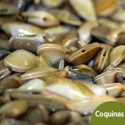 Coquinas de Huelva a Domicilio