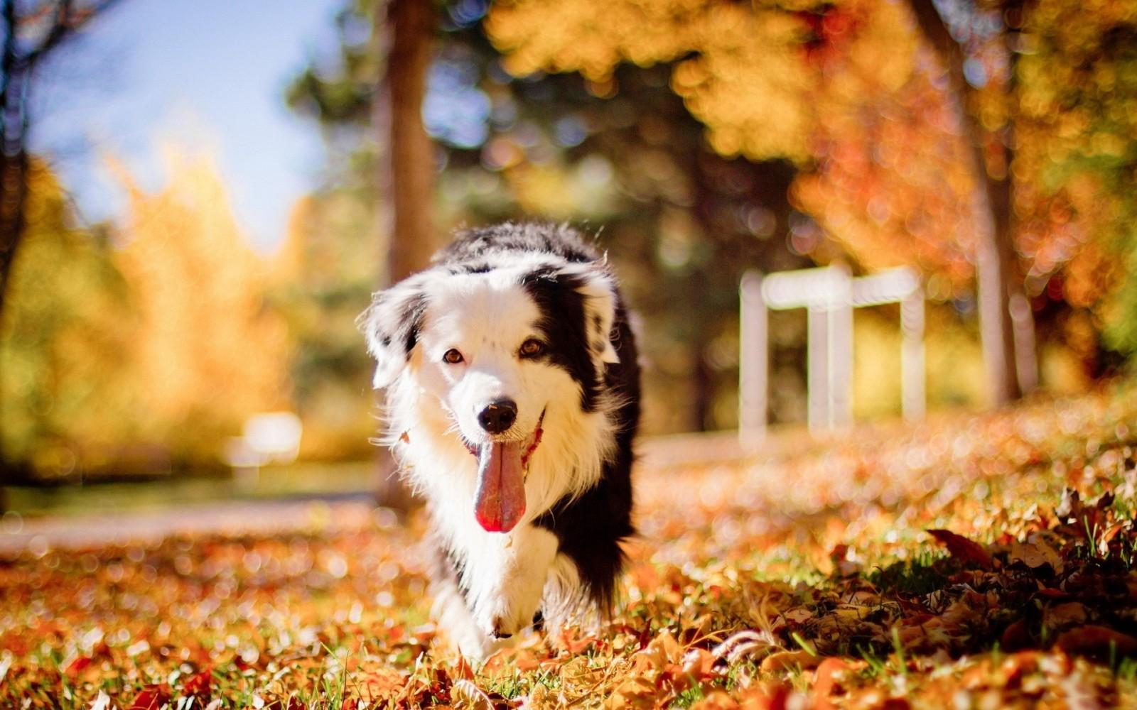 perros otoño valencia mimomimascota
